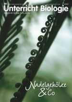 Nadelgehölze & Co.
