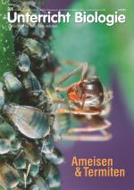 Ameisen & Termiten