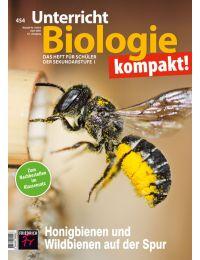 Honigbienen und Wildbienen auf der Spur